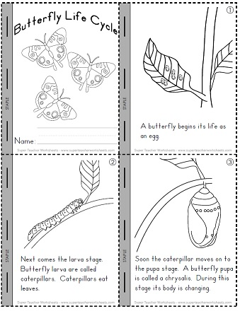 image about Butterfly Life Cycle Printable Book identified as Lifestyle Cycle of a Butterfly