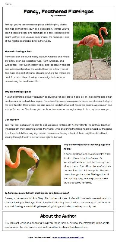 Flamingos Reading Comprehension