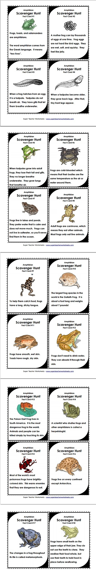 Frogs Scavenger Hunt
