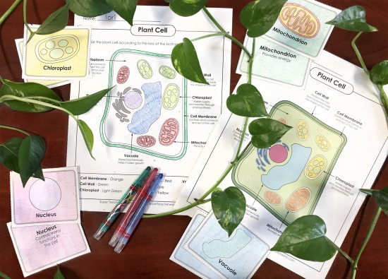 Plant Cell Worksheets