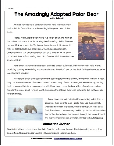 polar bear fact sheet for kids kids matttroy. Black Bedroom Furniture Sets. Home Design Ideas