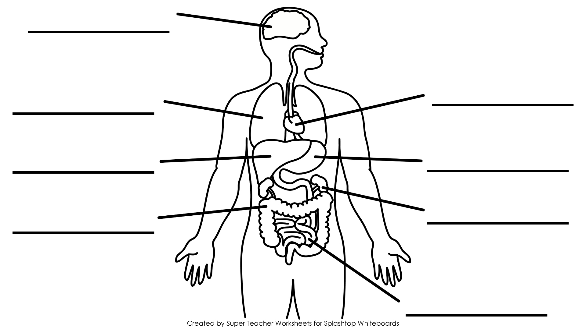 Label the major organs of the human body  including heart  lungs    Human Body Diagram For Kids