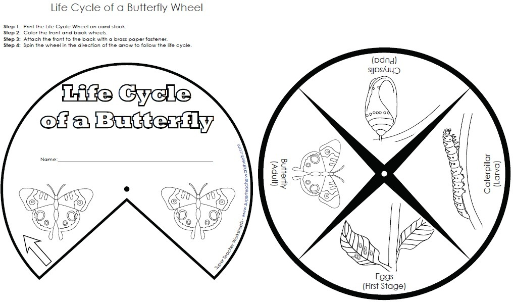 Worksheets Butterfly Life Cycle Worksheet life cycle wheel butterfly wheel