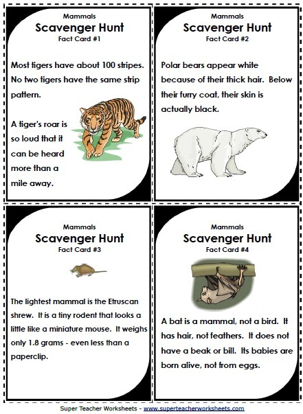 Mammal characteristics worksheets