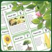 Plant Worksheets