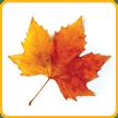 Autumn Leaves Activity