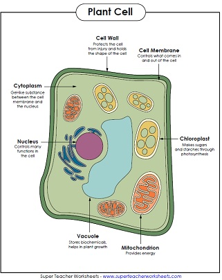 Label the Plant Cell Worksheets (SB11867) - SparkleBox