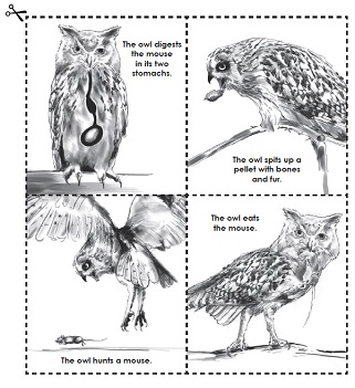 Worksheet Owl Pellets Worksheets owls and owl pellet worksheets activity